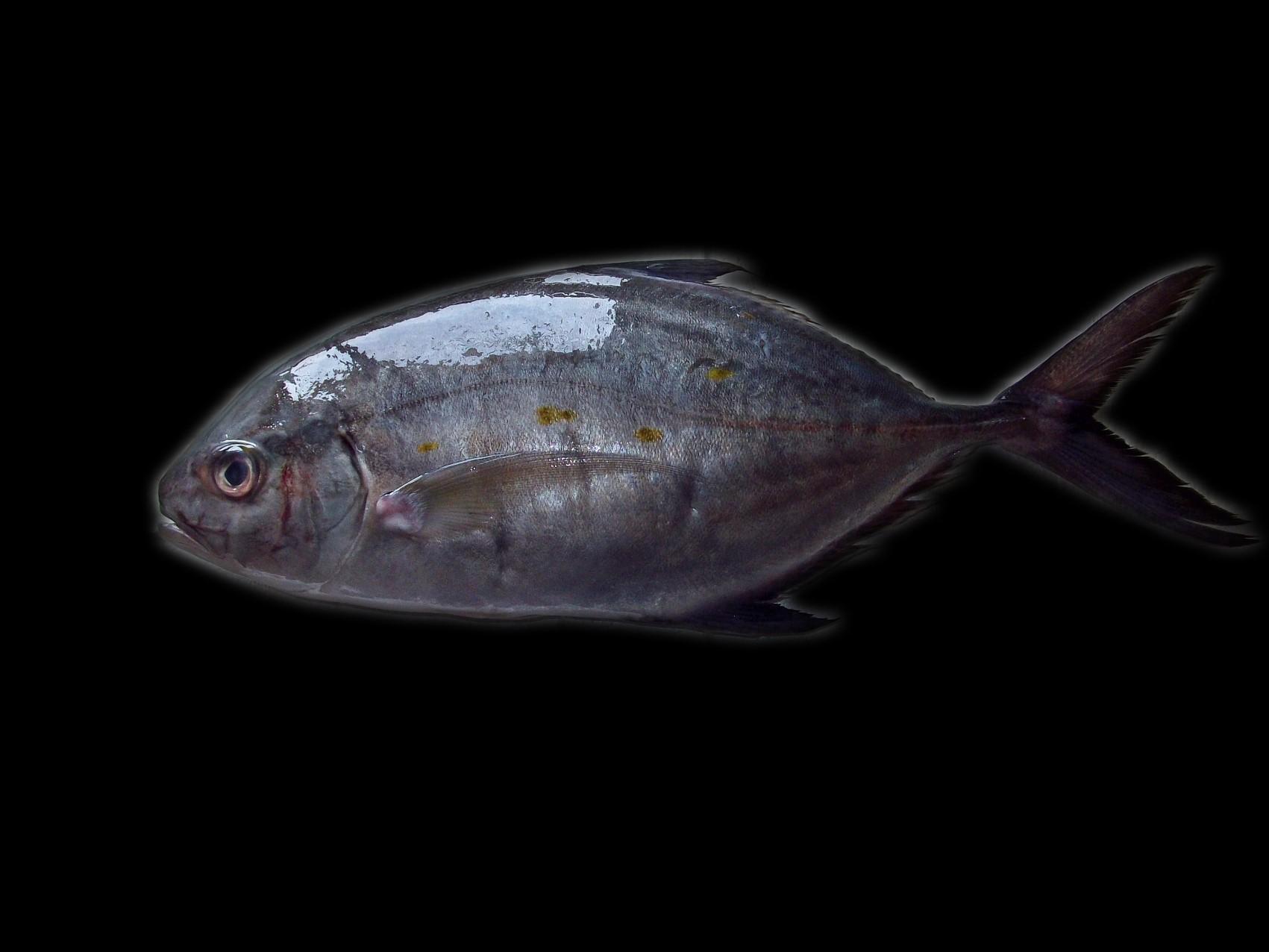第197話|最近多いケーススタディ④「出世魚分析(隠れた宝石探し)」